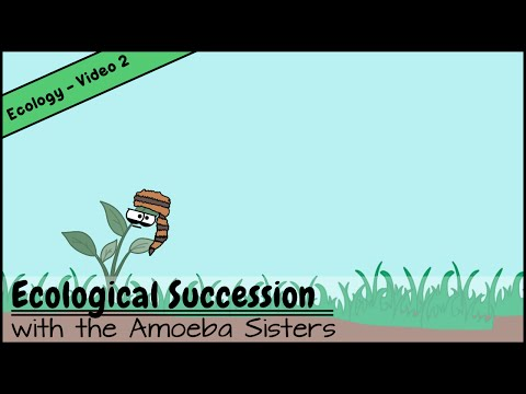 Ecological Succession: Nature's Great Grit