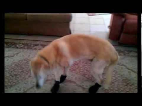 Beau's Booties
