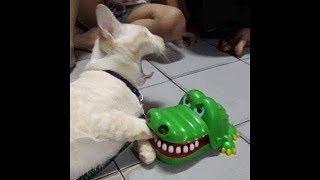 Video lucu Tingkahlaku Kucing Dan Anjing 6