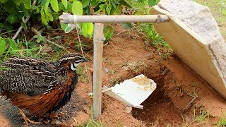 Awesome Quick Bird Trap Using Paiute Deadfall - How To Make Bird Trap With Paiute Deadfal Works 100%