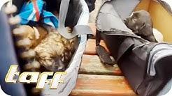 Wahnsinn! So grausamer ist die Welpen-Mafia! Der schlimme Hundehandel im Netz! | taff | ProSieben