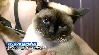 В обычной квартире петербурженка содержит 20 животных