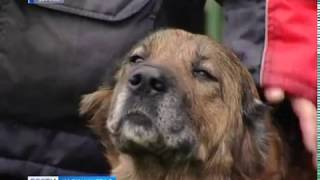 Все сторожевые собаки калининградских «Теплосетей» обрели хозяев