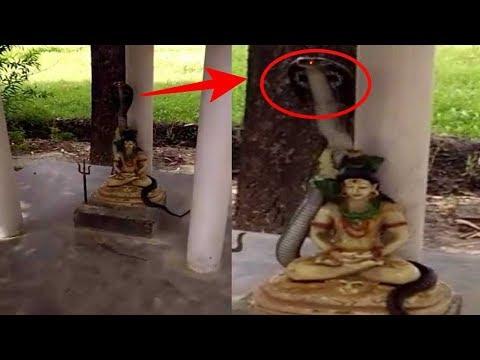 Warga Dihebohkan Kemunculan Ular Cobra Bersinar di Patung Dewa Shiwa, Sungguh Aneh !!