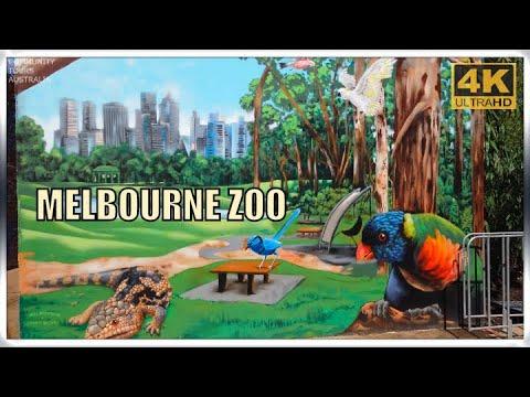 MELBOURNE ZOO AUSTRALIA DJI OSMO POCKET 4K