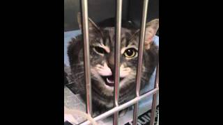 Cat cries when she leaves