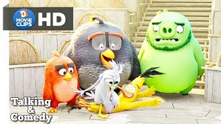 the Angry Birds Movie 2 Hindi Getting The Team Talking & Comedy Scene MovieClips