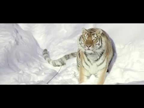 DJI - Snow Safari