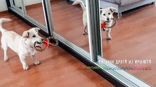 Собака радуется что ее забрали домой из приюта | we took a dog from a shelter