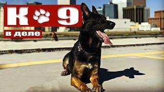 Про служебных собак. ПОДРАЗДЕЛЕНИЕ К-9 полиции. Использование для соблюдения законов.