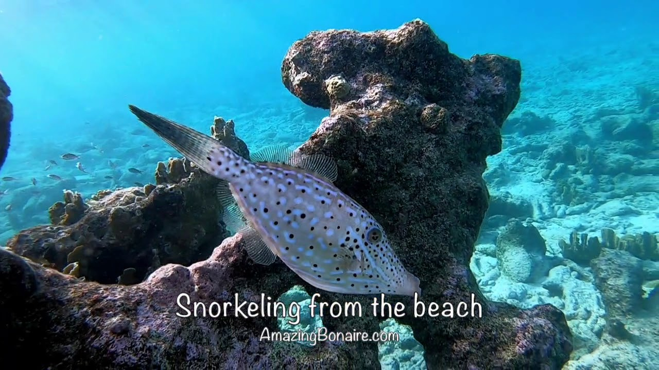 Private Snorkeling Amazing Bonaire