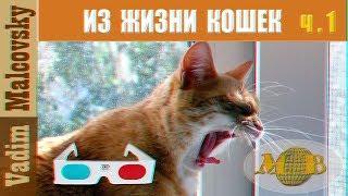 3D stereo red cyan Из жизни кошек  Часть 1. Мальковский Вадим