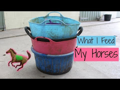 What I Feed My Horses | Concentrates