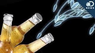 Alcohol Is Ruining Your Sperm!