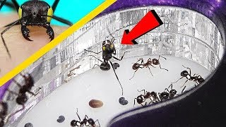 좀비 개미는 티몬의 새장에 살아있는 방 투어를 묻었습니…