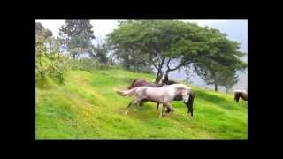 Horses: Wild herd behavior