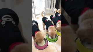 Funny cute and smart dog drink milk together