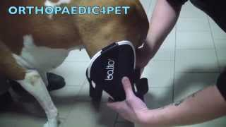 orthopaedic brace for knee for dogs bt jump