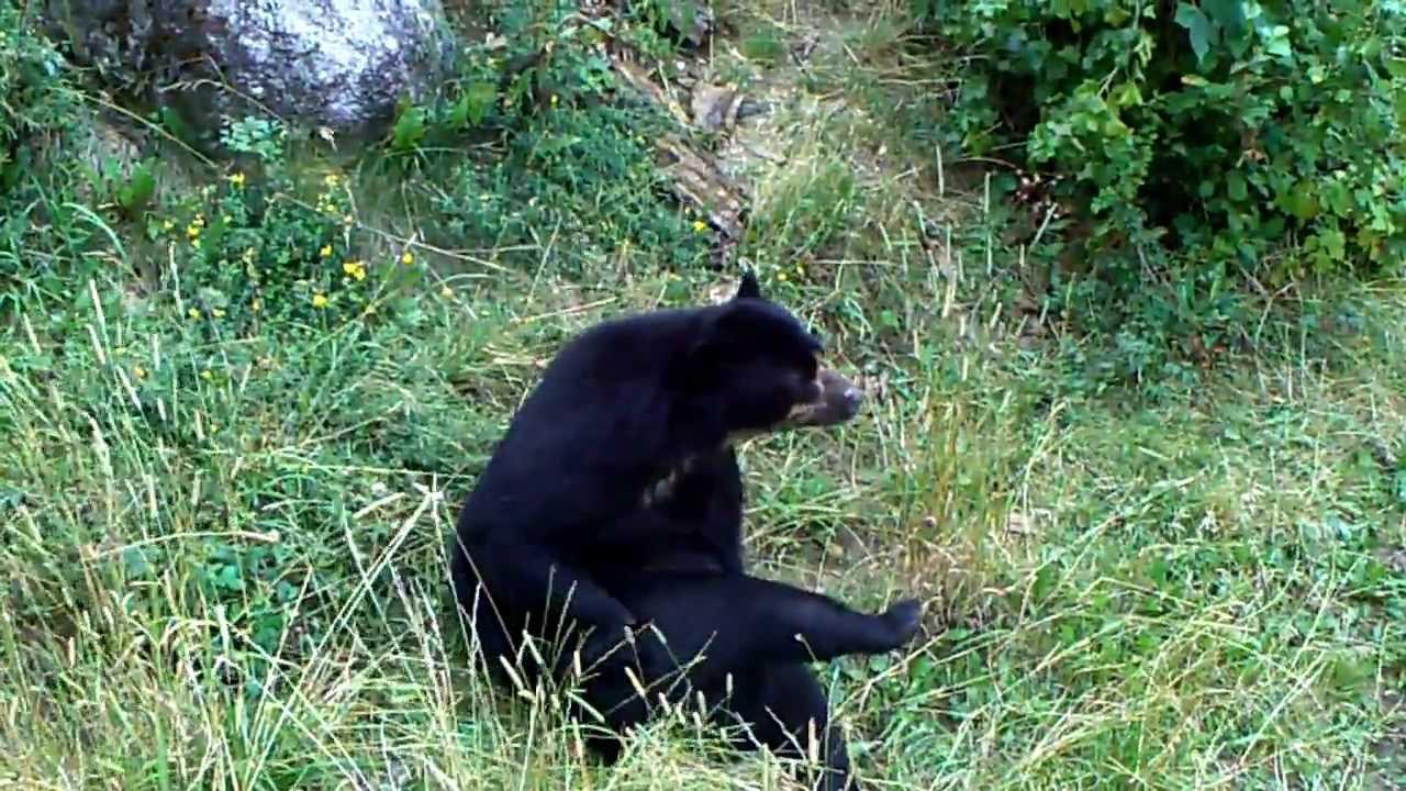 Heavy Metal Bear - YouTube