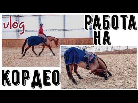 VLOG: день НХ/день из жизни конника 🐴