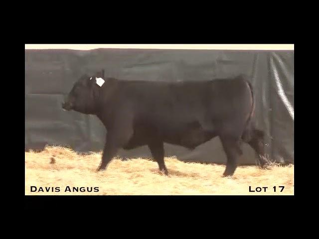 Davis Angus Lot 17