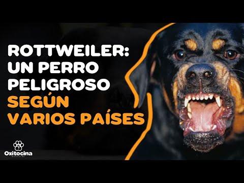 ¿Por qué el rottweiler tiene mala fama?