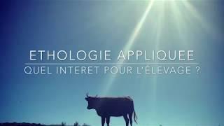 L'intérêt de l'éthologie dans l'élevage