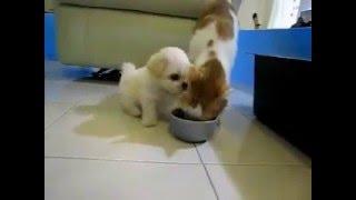 Pisica vrea sa pape dar catelul doreste sa se joace :)) Uite ce a iesit :))