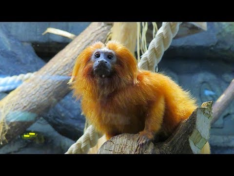 ВЛОГ Новосибирский ЗООПАРК 🐼 Детские развлечения в зоопарке / Видео для детей про животных