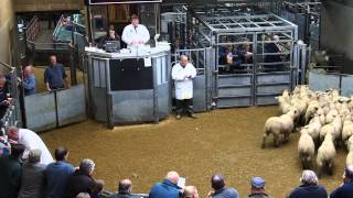 Sheep auction at Thainstone Mart, Scotland