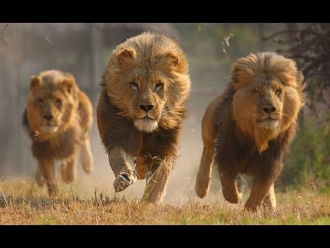 Animal Defense Against Predators - Wildlife Defense (Nat Geo)