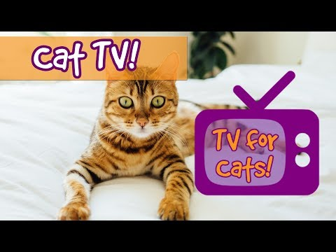 CAT TV! Soothing Interactive Nature Footage for Cats with Re