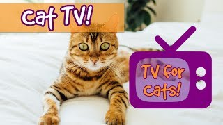 CAT TV! Soothing Interactive Nature Footage for Cats with Relaxing Music to Calm Stressed ...