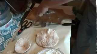 Съедобные грибы Зонтики