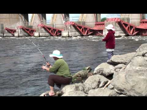 White bass Fishing - Mississippi River July, 13 -  2017