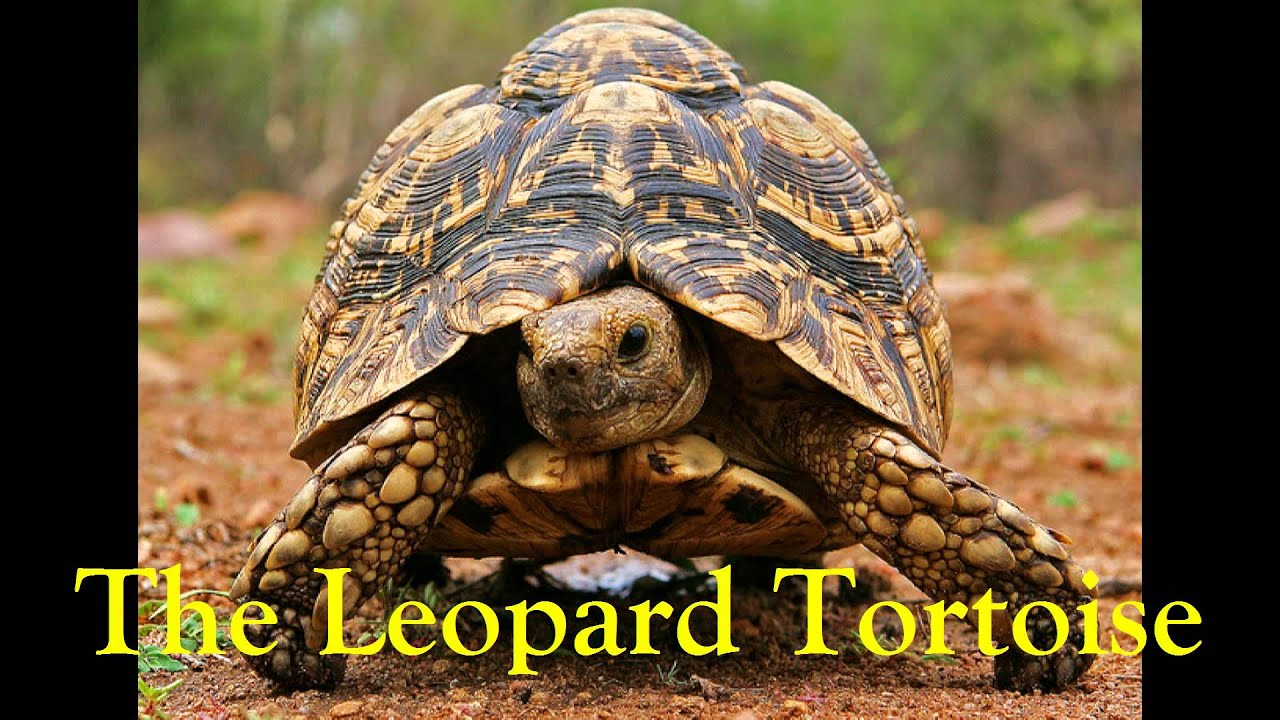the scientific latin names of various exotic animals youtube