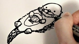 How to Draw a Cartoon Sea Otter
