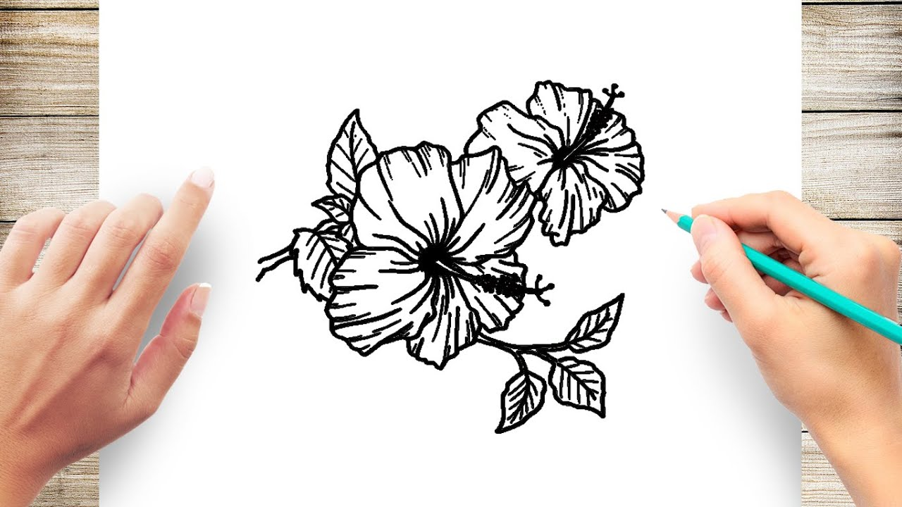 How To Draw Hibiscus Flower Easy