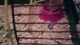 Мой новый питомец Ватрушка и всё самое интересное! В мире животных!