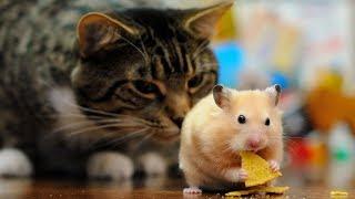 Смешные кошки и коты с собаками Сентябрь 2019 Смешные коты приколы funny cats animals #96