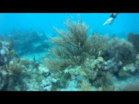 Molasses Reef Dive Uncut.