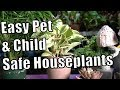 Pet & Kid Safe Houseplants That Are Easy to Grow!