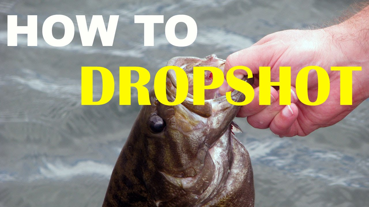 How to dropshot fish bass fishing youtube for Youtube bass fishing