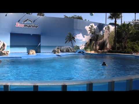 2013 Portugal   Zoo Marine   Dolphin Show