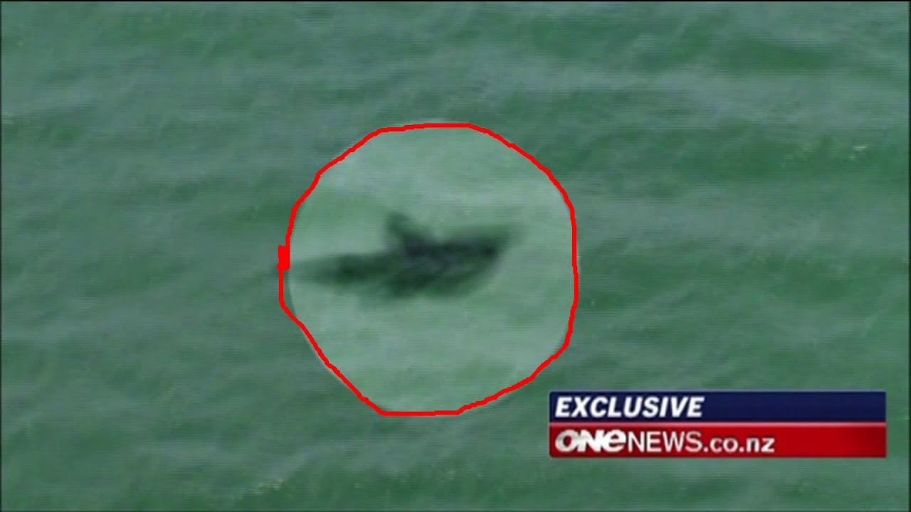 Megalodon Shark Caught on Tape by Helicopter (Amazing