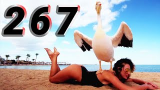 COUB #267 | Best Cube | Best Coub | Приколы Март 2020 | Февраль | Best Fails | Funny | Extra Coub