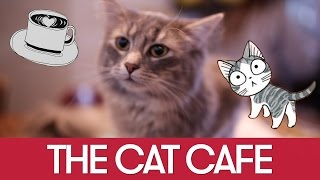 Montreal's Cutest Cats - ALL IN ONE PLACE!