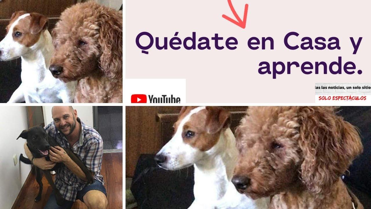 Caninos en cuarentena: Cómo puedes ayudarlos ?