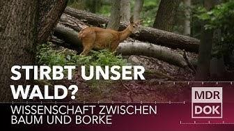 Stirbt unser Wald? Wissenschaft zwischen Baum und Borke | MDR Wissen