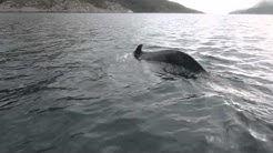 Valas veneen alla (Whale under the boat)